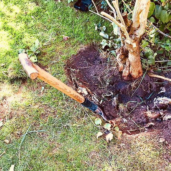 Baum ausgraben